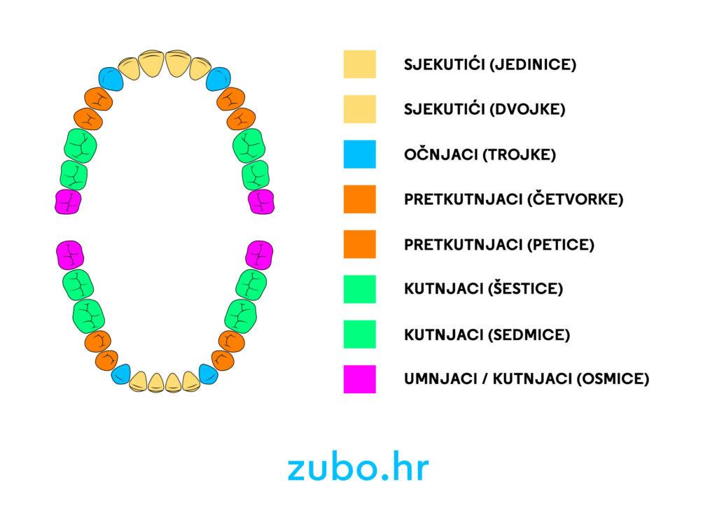 Popis zubi imena